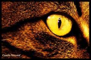 Eyes of my cat by CamilaNewsted