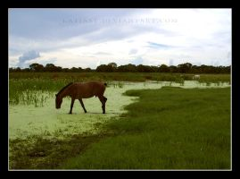 Horses in the lake by KatiaST