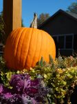 A Pumpkin and Some Plants by Artlune
