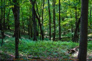 00-TalorsvilleLakeStatePark-June-2015-DSC06936-WP- by darkmoonphoto