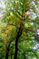 Chestnuts by joerimages