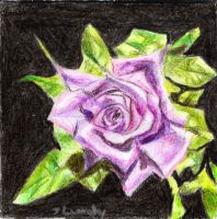 The Rose by ScullyNess