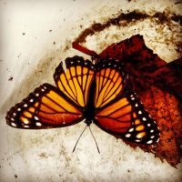 Monarch Butterfly by Tay-Tay97