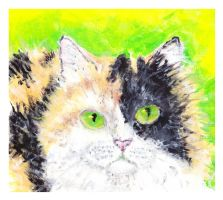 Calico Cat  by caitiedidd