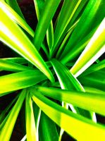 Green plant by Backlash89