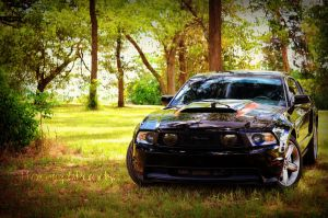 Black Beauty 05 by PhotographicCrypto