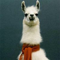 llama.. llama.. by PhotoBoothLoveXx