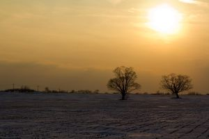 Afternoon Cornfield in Winter by Eternalfall1