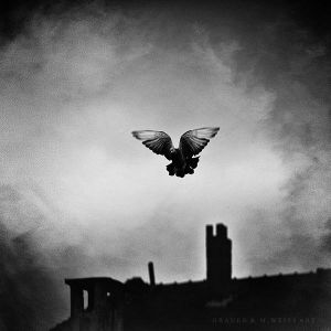 fly into your dream by GrauenAndMWeissArt