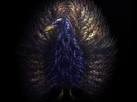 Royal Peacock by 13Kudos