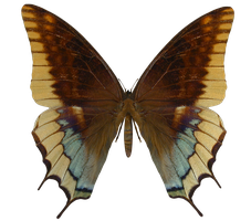 E-S Butterfly VI by Elevit-Stock