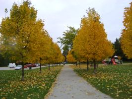 Canadian Fall Colours 23 by Aswang301