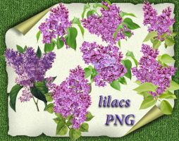Lilacs by roula33