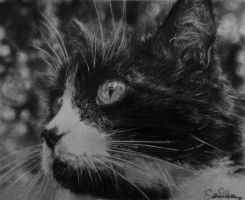 Realistic cat graphite drawing by ShonaW