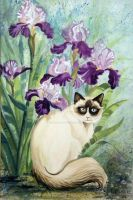 Siamese and Iris Watercolor by HouseofChabrier