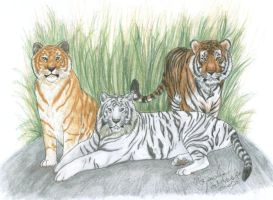 Tigers of a Differant Color by NightTracker