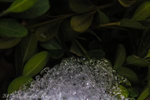 Ice Crystals by MakaylaElaine1