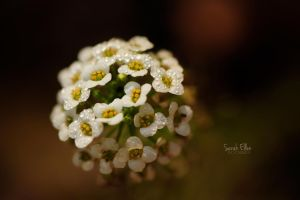 Tiny by RobertsPhotography