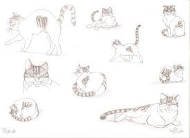 Pixy -cat anatomy and economy of lines studio by smeagolisme