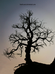 Lonely old tree 2 by beads-poet