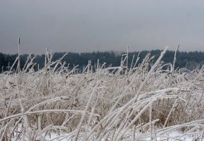 ice grass by Hechicero