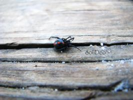 Black widow by SoliDeo