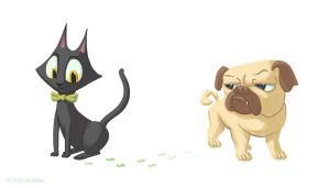 Cat and Dog by PigeonKill