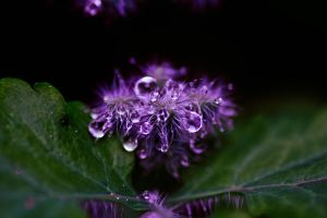 Purple rain by rainman65