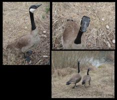Geese pals by NightWolf7272
