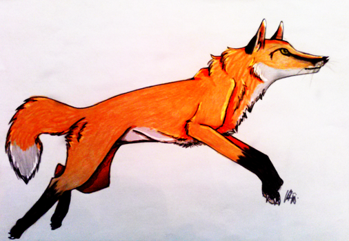 Fox by XxEpicPanda13xX