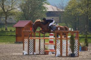 Chestnut Horse - Show Jumping stock - 11.5 by MagicLecktra