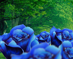Tradigital Blue Roses by jesus-at-art