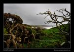 Gnarly Views by Andrew-and-Seven