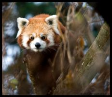 shall we play a hide and seek? by morho