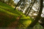 follow your path by CrystalGraphic