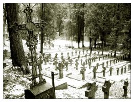 forest of crosses by mountine