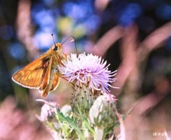 Looking for nectar by Lucia-Izar