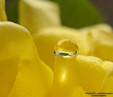 yellow DROP by lindahabiba