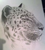 Leopard sketch by theTurbokat