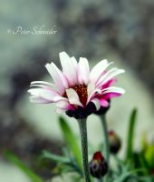 Spring child. by Phototubby