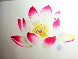 Lotus Flower by White-Winged-Dove