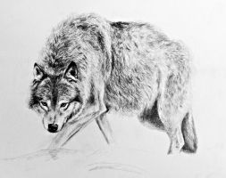 Wolf by AnnaShell