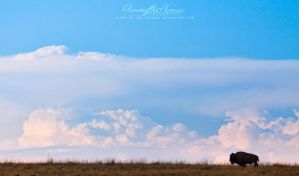 Lone Bison by Flame-of-the-Phoenix