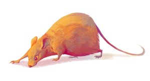 rat by scrii