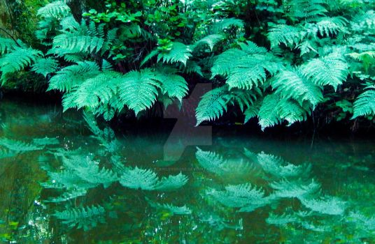 Leaves Reflection In The Water by FlawlessRose