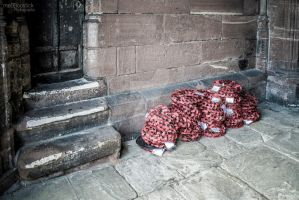 Poppies - Chester, UK by BountyBam