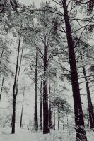 forest in the winter by antarctics