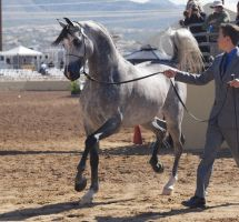 Grey 12 by ZodiaqueAries