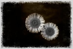 two revisited by awjay