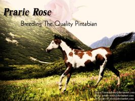 Prarie Rose by PintabianDreamer1222